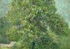 盛开的马栗树