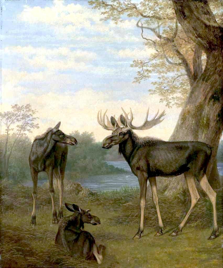 麋鹿在河边的风景_Elk in a River Landscape-雅克·劳伦特·阿加斯