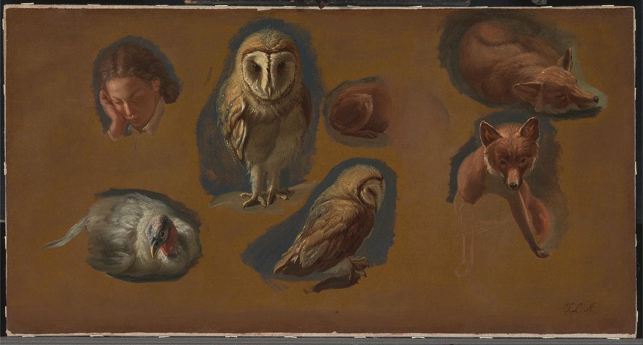 研究狐狸、仓鸮、雌孔雀和一个年轻人的头像_Studies of a Fox, a Barn Owl, a hen, and the Head of a Young Man-雅克·劳伦特·阿加斯