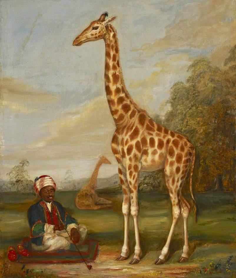 两只长颈鹿和一个坐在草原上的印度服务员_Two Giraffes with a Seated Indian Attendant in a Savannah Landscape-雅克·劳伦特·阿加斯
