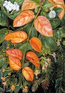 花沙捞越,婆罗洲_Flowers of Sarawak, Borneo-玛丽安娜·诺斯
