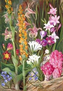 开普敦附近沙滩上的花朵_Flowers of the Sandy Flats near Cape Town-玛丽安娜·诺斯
